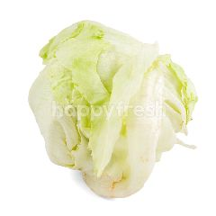 Masada Head Lettuce Organik