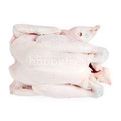 Ayam Kampung Asli 7-8