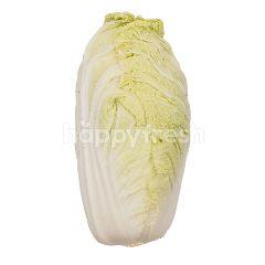 Suan Mokh Garden Long White Cabbage