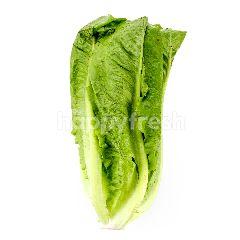 AGAPE ORGANIC Cos Lettuce