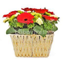 Gerbera Flower Basket