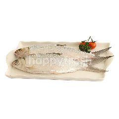 บิ๊กซี ปลากระบอกจีนไม่ผ่าท้อง