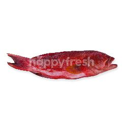 Ikan Kerapu Merah