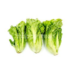 Chinese Lettuce