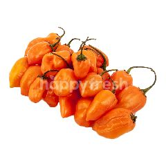 Cabe Habanero Oranye