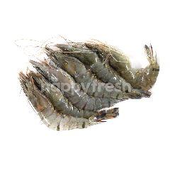 Pancet Shrimp AK 40
