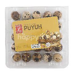 Choice L Telur Puyuh