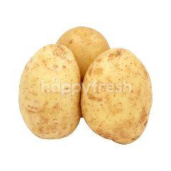 Potato 800G