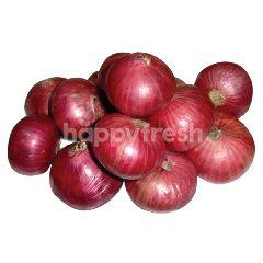 Tesco PP Premium Big Red Onion (L) 800G
