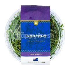 Ingreens Salad Wild Rocket