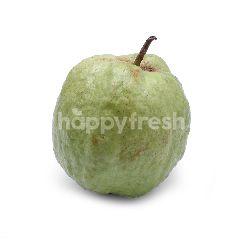 Guava Lohan