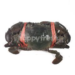 Kepiting Jantan