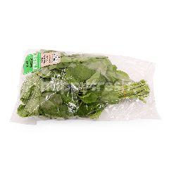 TESCO EAT FRESH Green Spinach (Bayam Hijau Muda)