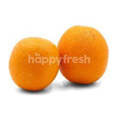 Valencia Orange (M)