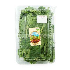 Living Organic Daun Kemangi Organik
