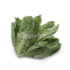 Organic Mini Cos Lettuce