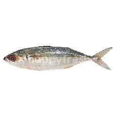 Mackerel (Ikan Kembong)