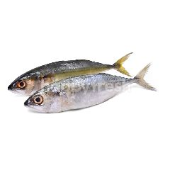 Indian Mackerel (Mabong)