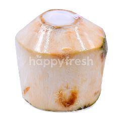 Cocobiz Enterprise Whitepulp Coconut