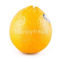 บิ๊กซี ส้มนาเวล