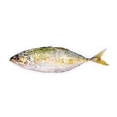 Scad (Ikan Selar)