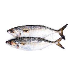Ikan Kembung Banjar