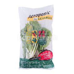 Amazing Farm Pakchoy Putih Aeroponik