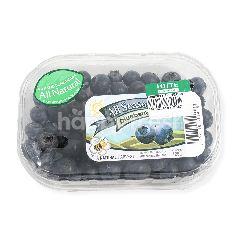 All Seasons Blueberry All Seasons