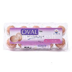 Oval Telur Ayam Negeri