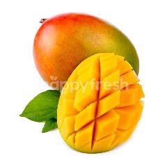 Gedong Gincu Mango