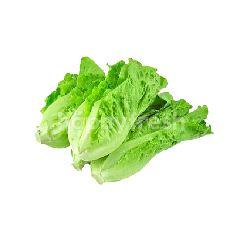 Daily Fresh Vegetables Salad King