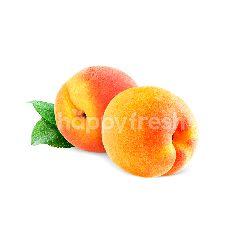 Pinky Nectarine
