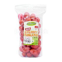 Tomat Cherry Plastik