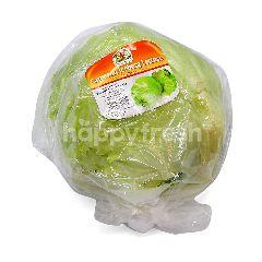 Fresh Ever Cameron Iceberg Lettuce