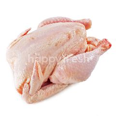 Whole Broiler Chicken