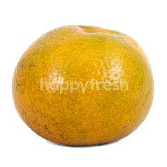 Medan Super Orange