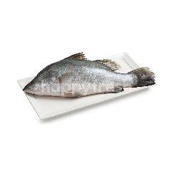 บิ๊กซี ปลากะพงขาวสด