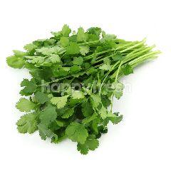 Coriander Herbs
