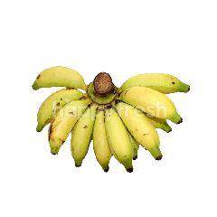 Gold Banana