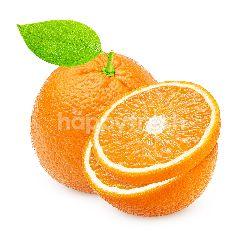 Jeruk Mandarin Pakistan