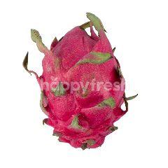 Jumbo Red Dragon Fruit