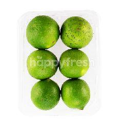 MAISON'S Common Lime