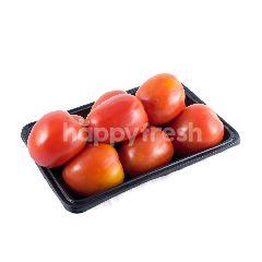 Tomat Oriental