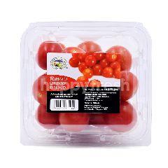 GENTING GARDEN Tomato Cherry Round