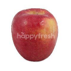 Pacific Jumbo Apple