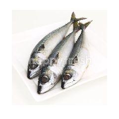 Saba Fish L 1 Each