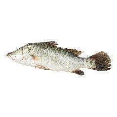 สิริคุณ ปลากะพงขาวขนาดกลาง