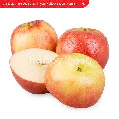 แจ๊ส แอปเปิ้ล แจ๊ส