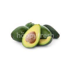 Mexico Avocado