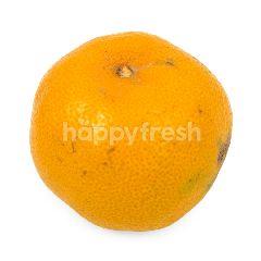 Super Medan Orange